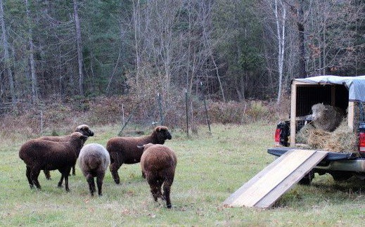 Vermont Sheep and Goat Association