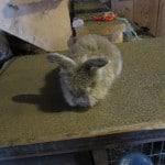 bunnies42016-007